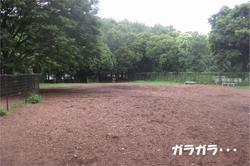 ガラガラ.JPG